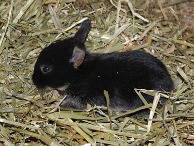 kaninchenmutter mit babys im nest